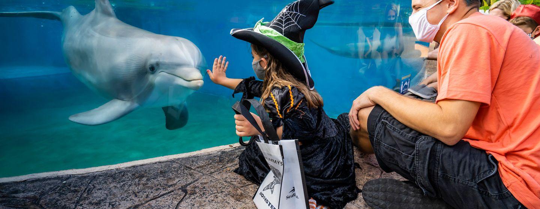 7023_2020_spooktakular_witch_dolphin.jpg